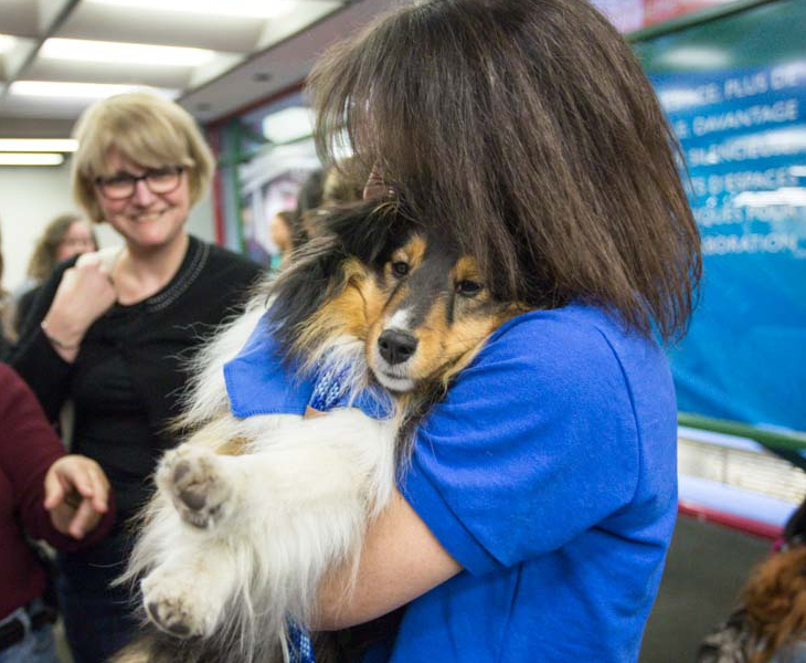 Pet Therapy Dogs are back! Catch them at Vanier Library